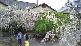 20180409京都街歩き(その26)