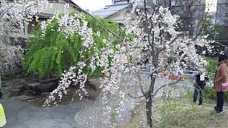 20180409京都街歩き(その28)