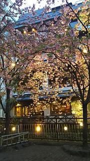 20180409京都街歩き(その44)