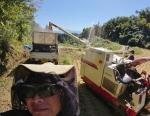 棚田米の稲刈りを開始