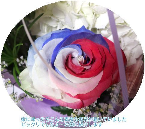 ⑤見事な薔薇