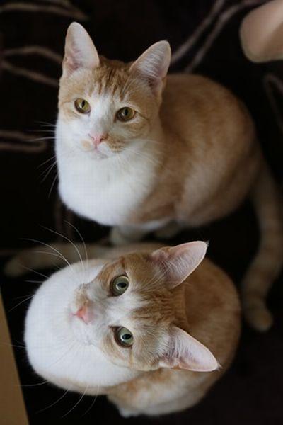 ③兄弟猫さん