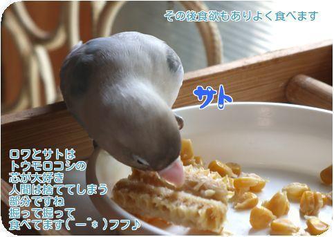 ③良く食べ