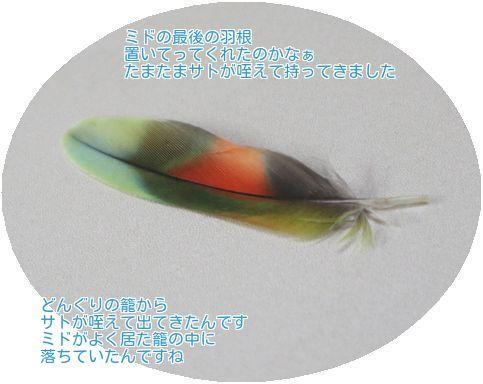 ②最後の羽根