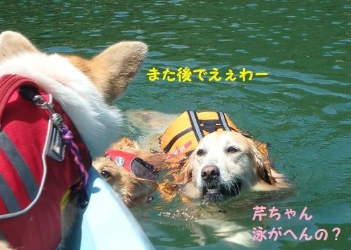 泳がんの?