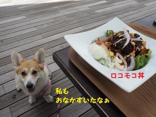 18ロコモコ丼