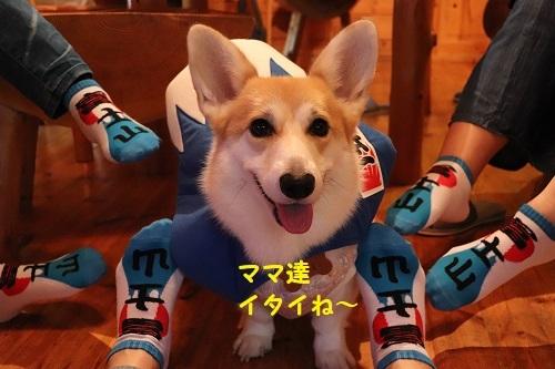 22富士山靴下2