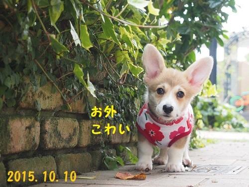 1お散歩デビュー