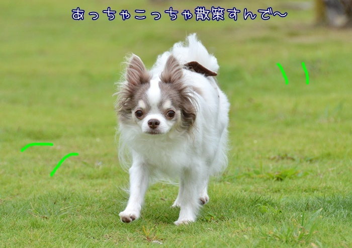 DSC_8589_20180819201338e26.jpg