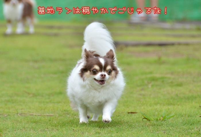 DSC_8590_20180819201339f1c.jpg