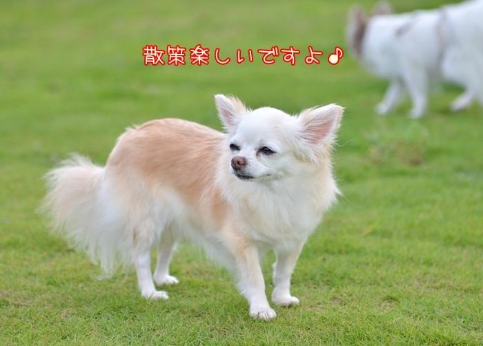 DSC_8795_20180828211113a4d.jpg