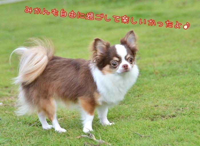 DSC_8808_20180828211116a8d.jpg