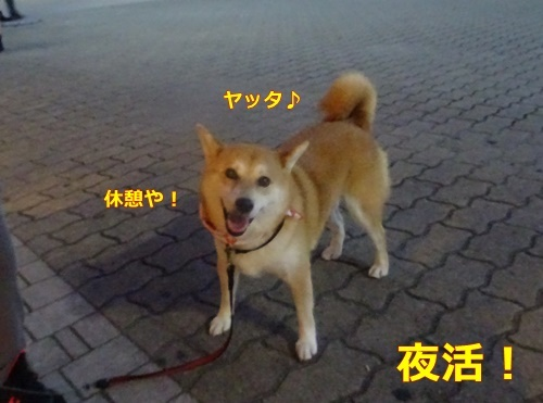 1大阪城で夜活
