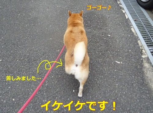 1イケイケ散歩