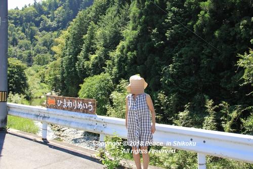himawarimisato-07233066.jpg