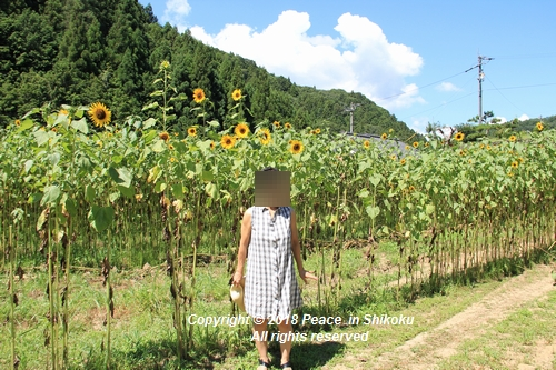 himawarimisato-07233077.jpg