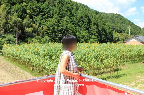 himawarimisato-07233079.jpg