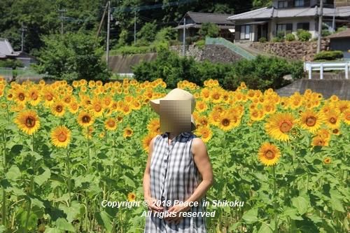 himawarimisato-07233179.jpg