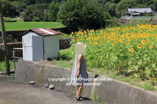 himawarimisato-07233214.jpg