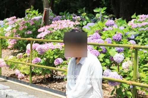 iasijasakaide-06182014hh.jpg