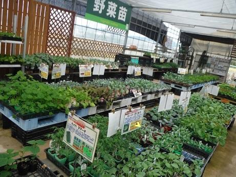 20180907 1野菜