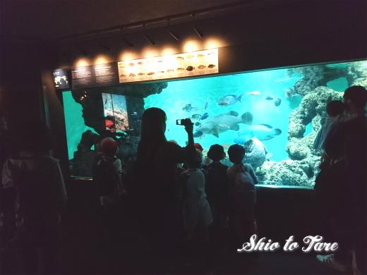 DSC_1389_20180921_葛西臨海水族園