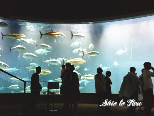 DSC_1401_20180921_葛西臨海水族園