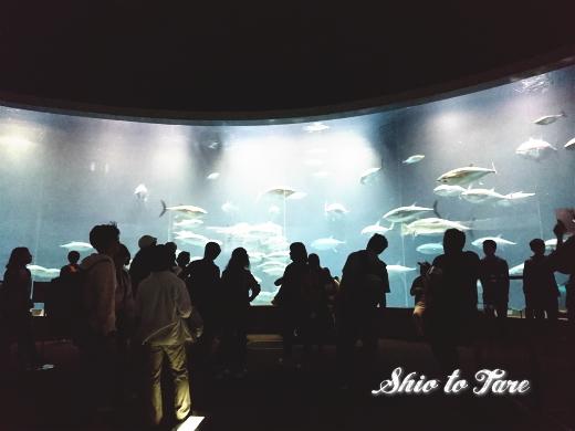DSC_1443_20180921_葛西臨海水族園