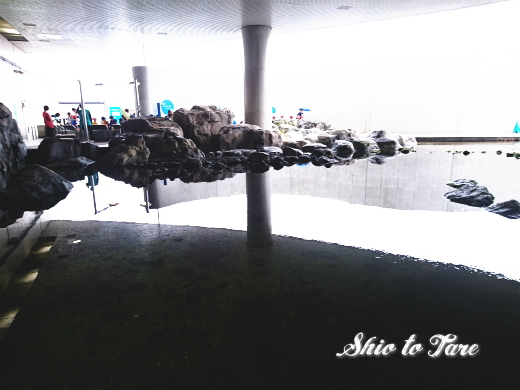 DSC_1444_20180921_葛西臨海水族園
