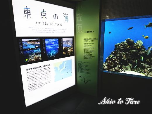 DSC_1449_20180921_葛西臨海水族園