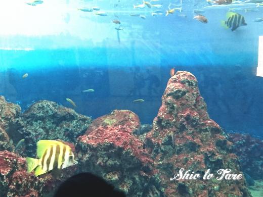 DSC_1454_20180921_葛西臨海水族園