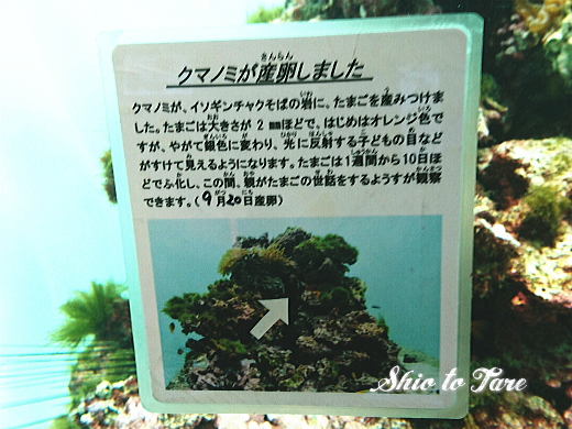 DSC_1455_20180921_葛西臨海水族園