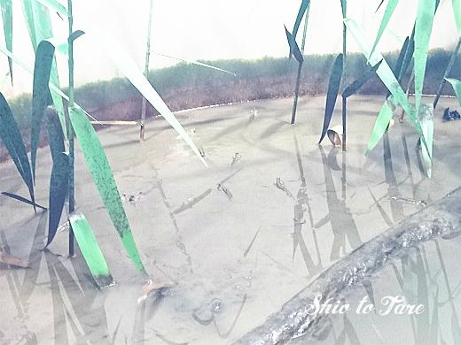 DSC_1474_20180921_葛西臨海水族園