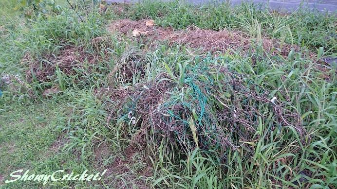 2018-08-12土壌改良 (1)