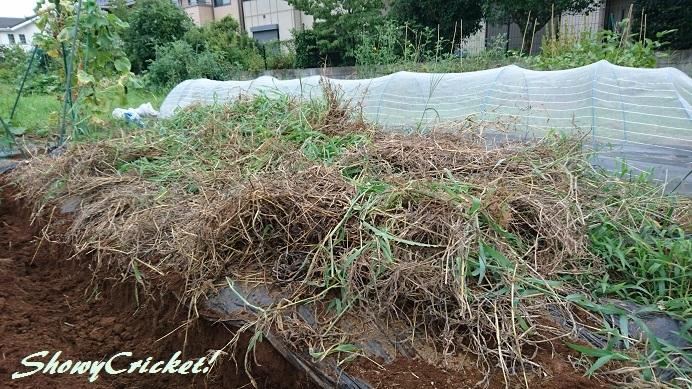 2018-08-12土壌改良 (3)