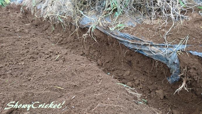 2018-08-12土壌改良 (4)