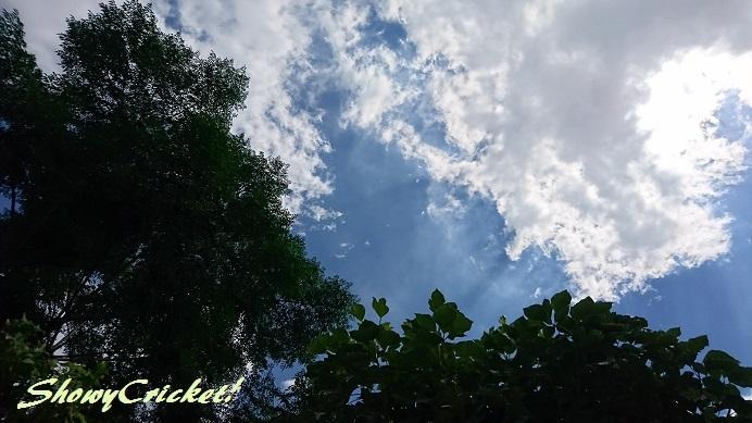 2018-08-26オクラ (3)