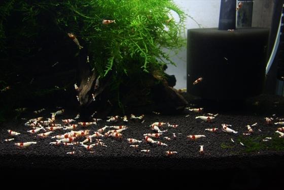shrimp cafe_1329