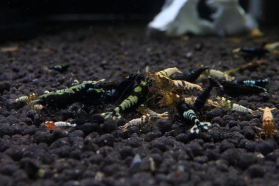 shrimp cafe_1414