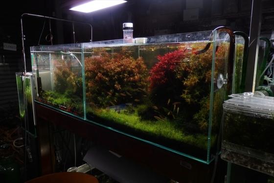 shrimp cafe_1402
