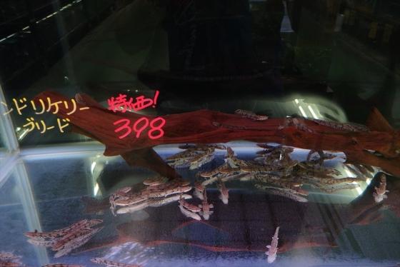 shrimp cafe_1409