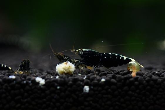 shrimp cafe_1443
