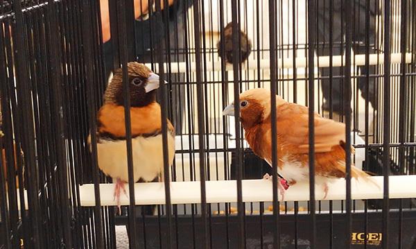 鳥さんKIMG9024