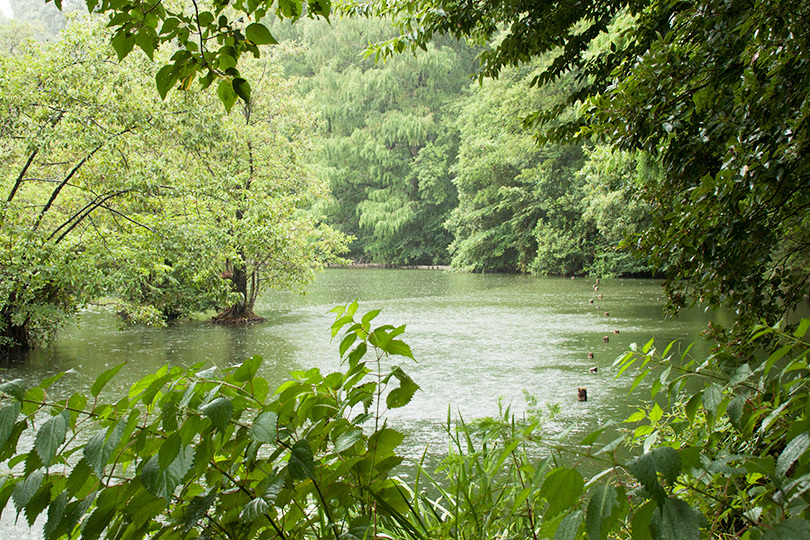雨の池IMG_3199