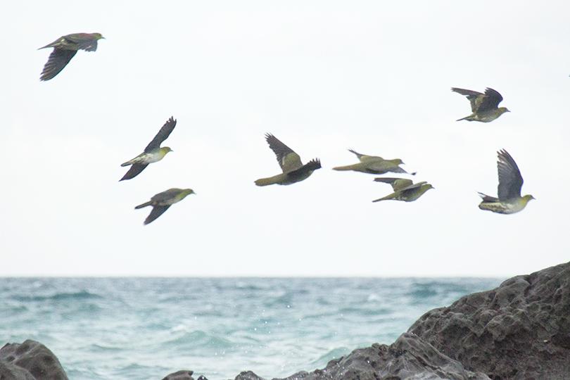 アオバト海IMG_3987
