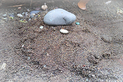 チュンヒナのお墓KIMG9596
