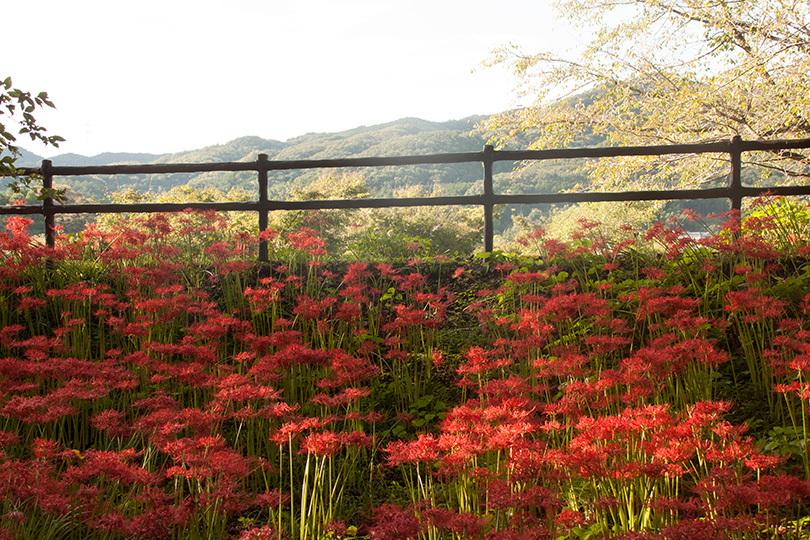 山と花IMG_4856