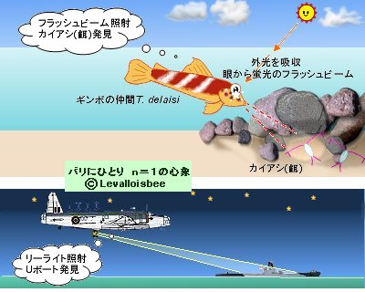ギンボT delaisiはリーライト機のように餌を照らす