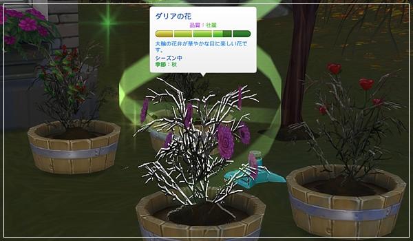 Sea_K15-33.jpg