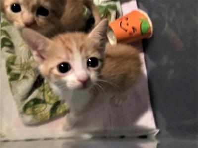 沖縄子猫_180901_0002